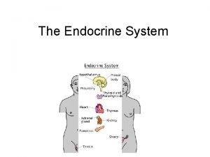 The Endocrine System The Endocrine System Controls many