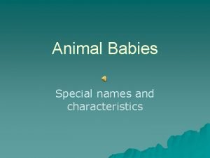 Animal Babies Special names and characteristics Rabbit babies