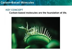 CarbonBased Molecules KEY CONCEPT Carbonbased molecules are the