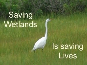 Saving Wetlands Is saving Lives prepared by ECOSCI