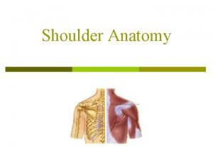 Shoulder Anatomy Shoulder p It is a ball
