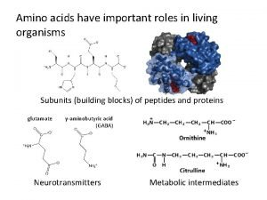 Amino acids have important roles in living organisms