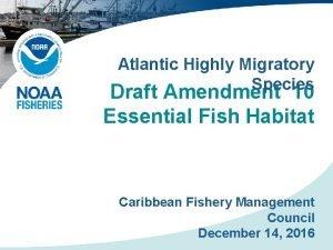 Atlantic Highly Migratory Species Draft Amendment 10 Essential