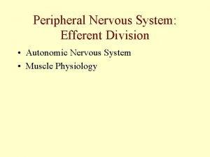 Peripheral Nervous System Efferent Division Autonomic Nervous System