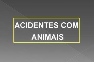 ACIDENTES COM ANIMAIS ACIDENTES COM ANIMAIS Consideraes especiais