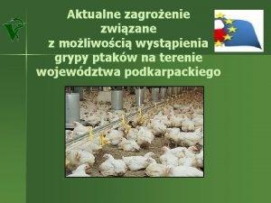 Aktualne zagroenie zwizane z moliwoci wystpienia grypy ptakw