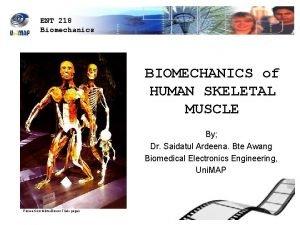 ENT 218 Biomechanics BIOMECHANICS of HUMAN SKELETAL MUSCLE