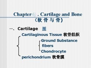 Chapter Cartilage and Bone Cartilage Cartilaginous Tissue Ground