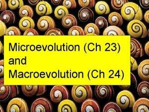Microevolution Ch 23 and Macroevolution Ch 24 Gene