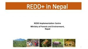 REDD in Nepal REDD Implementation Centre Ministry of