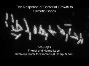 The Response of Bacterial Growth to Osmotic Shock