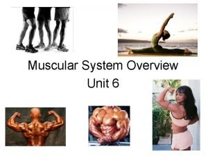 Muscular System Overview Unit 6 Types of Muscle