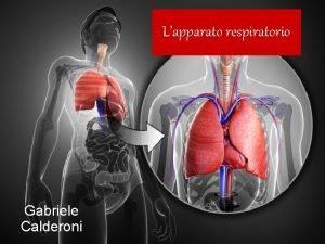 Lapparato respiratorio Gabriele Calderoni Che cos Lapparato respiratorio
