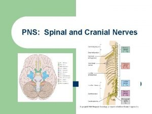 PNS Spinal and Cranial Nerves Peripheral Nervous System