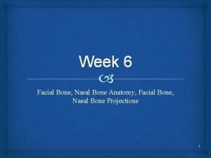 Week 6 Facial Bone Nasal Bone Anatomy Facial