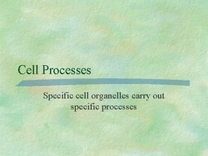 Cell Processes Specific cell organelles carry out specific