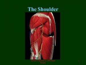 The Shoulder Interactive Shoulder c 2000 Primal Pictures