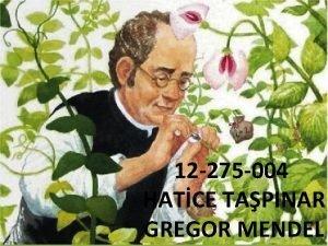 12 275 004 HATCE TAPINAR GREGOR MENDEL GREGOR