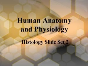 Human Anatomy and Physiology Histology Slide Set 2