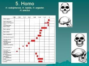 5 Homo H rudolphensis H habilis H ergaster