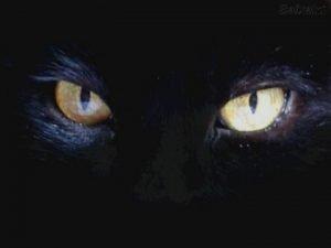 La plupart des gens pensent que les chats