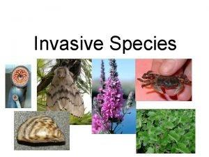 Invasive Species Invasive Species Apparently harmless animals and