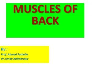 MUSCLES OF BACK By Prof Ahmed Fathalla Dr