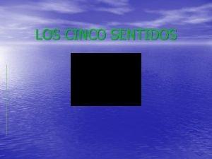 LOS CINCO SENTIDOS La Vista La vista es