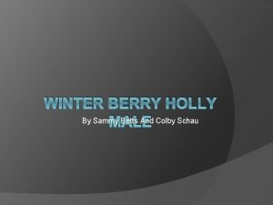 WINTER BERRY HOLLY By Sammy Betts And Colby