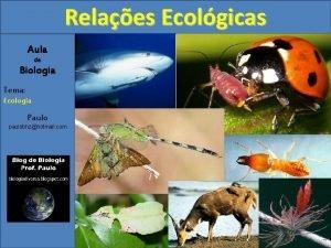 Relaes Ecolgicas Aula de Biologia Tema Ecologia Paulo
