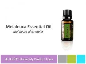 Melaleuca Essential Oil Melaleuca alternifolia dTERRA University dTERRA