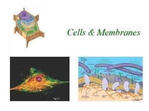 Cells Membranes Prokaryotic vs Eukaryotic Cells Why would