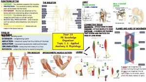 FUNCTIONS OF THE SKELETON SUPPORT The skeleton supports