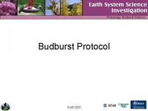 Phenology Budburst Protocol Draft 2005 Phenology Budburst Protocol