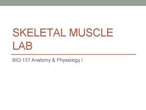 SKELETAL MUSCLE LAB BIO 137 Anatomy Physiology I