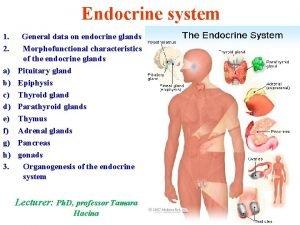 Endocrine system 1 General data on endocrine glands