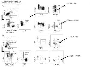 Supplemental Figure S 1 Conv NK cells NKG
