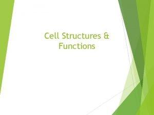 Cell Structures Functions Comparing Prokaryotes Eukaryotes Prokaryotic Cells