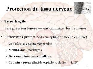 Protection du tissu nerveux Page 56 Tissu fragile