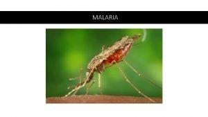 MALARIA Malaria p retur Dog 212 millioner cases