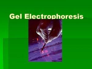 Gel Electrophoresis Electrophoresis DNA Separation Standard tool in