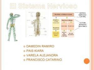 El Sistema Nervioso DAMEDIN RAMIRO PAIS KIARA VARELA