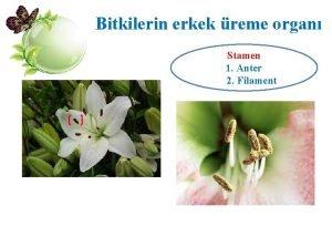Bitkilerin erkek reme organ Stamen 1 Anter 2