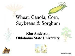 Wheat Canola Corn Soybeans Sorghum Kim Anderson Oklahoma