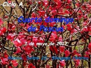 Ciclo A Cuarto domingo de Pascua 7 de