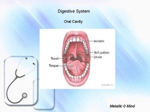 Digestive System Oral Cavity Metallic 0 Mind Oral