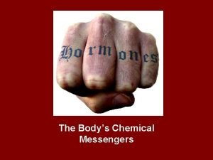 The Bodys Chemical Messengers Endocrine System Video 20