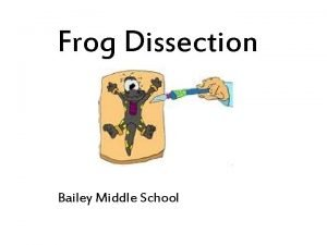 Frog Dissection Bailey Middle School External Anatomy Verify