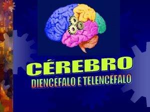 Crebro Diencfalo Telencfalo Poro mais desenvolvida e mais