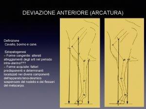 DEVIAZIONE ANTERIORE ARCATURA Definizione Cavallo bovino e cane